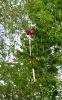 Nike Tomahawk in tree